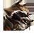 Rocket Raccoon Icon 2