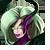 Meretrix Icon