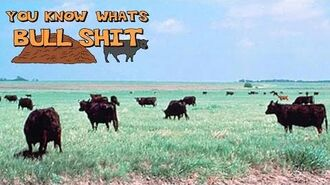 You Know What's Bullshit!? - Grass