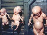 Failed Ripley clones