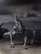 51658-Alien-Covenant-Xenomorph-650h