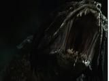 Predator Hound