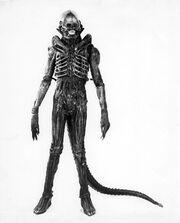 01060 Alien Sibthorp