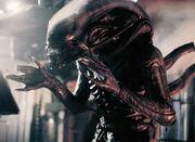 Alien mesoskeleton