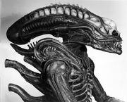 01061 Alien Sibthorp