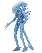 Bluexeno