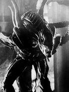 Aliensbwwarriorstill