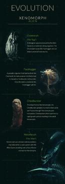 Xenomorph life cycle