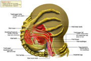 Facehugger Diagram