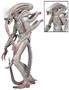 Albino-Alien-Aliens-Series-9-by-NECA-002