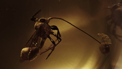 Parasitic alien wasp