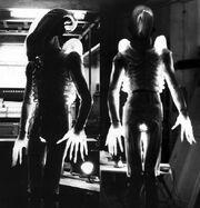 Translucent Alien