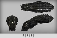 Raven head concept2