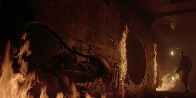 File:A3DC Dragonfire.jpg