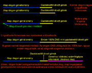 Génekv2