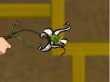 Pandzia lilia