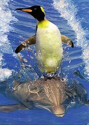 Funny Penguin-6