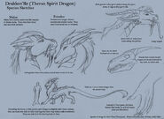 Spirit Dragon Sketches by ulario