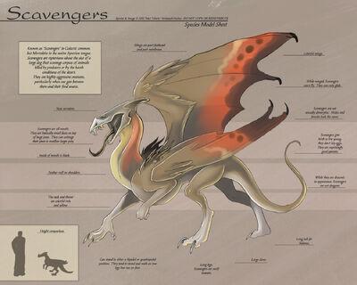 Scavenger-SpeciesSheet