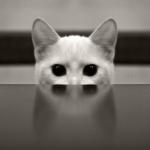 Rzym's avatar