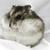Hamsterlover111