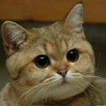 Devdraco's avatar
