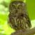 Owl fanatic