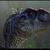 Welociraptor28