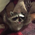 Kossio's avatar
