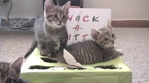 Whack-A-Kitty 2