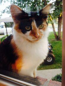 My cat, Gizmo