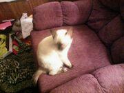 Vanilla my kitty