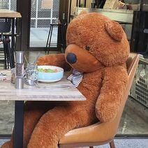 Teddy Eating