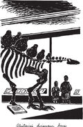 Dinosaur skeleton in museum SS6