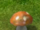 Drullkus/The mother of all mushrooms!