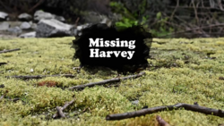 Missing Harvey
