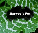 Harvey's Pet