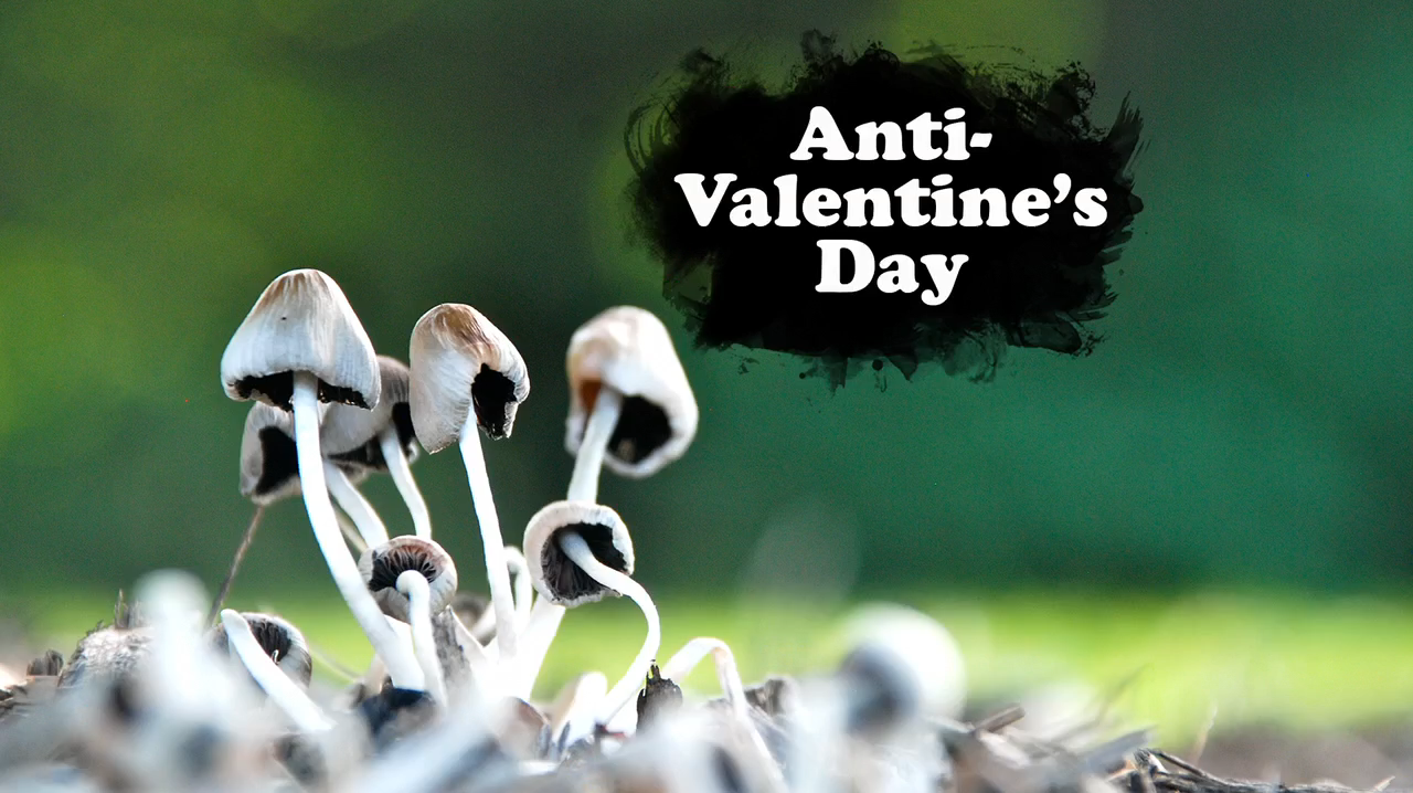 Buy Valentines Anti day facebook cover pictures pictures trends