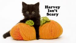Harvey Isn't Scary