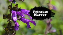 Princess Harvey