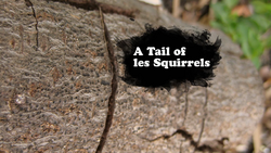 A Tail of Les Squirrels