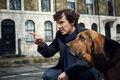 Toby (Sherlock) 01.jpg