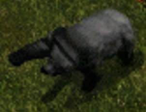 Petrified Bear