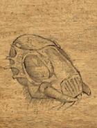 Ankheg shell