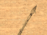 Staff Spear