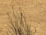 Bandit Scalp