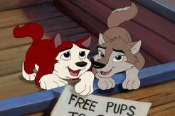 Puppy Kodi and Aleu