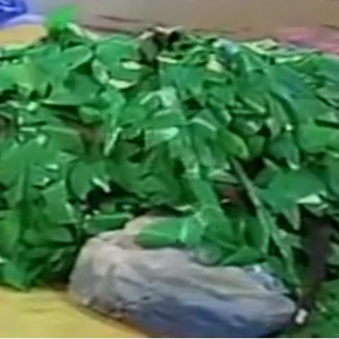 Seaweed in Monster Bananas