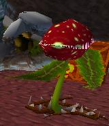 Растение-гренадёр 1
