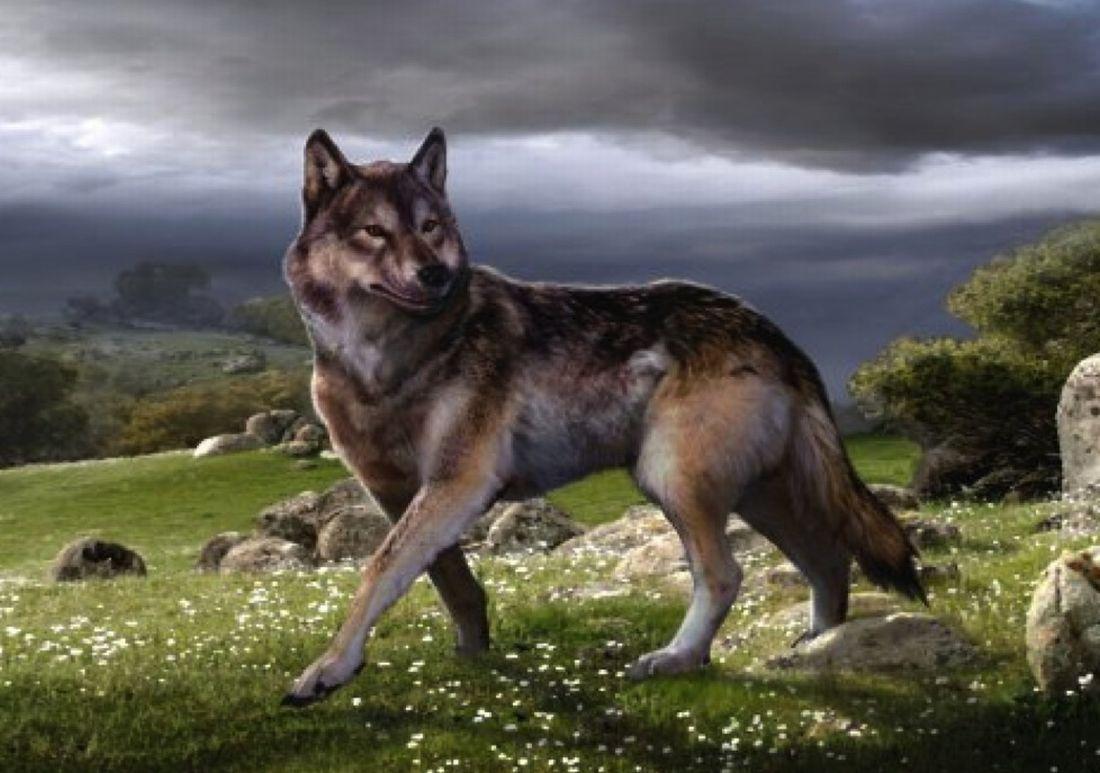 dire wolf clan barbarus wiki fandom powered by wikia